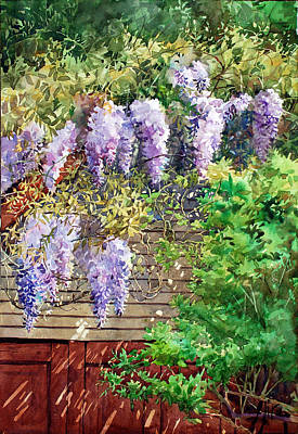 Watercolor Wisteria Painting - Blooming Wisteria by Peter Sit
