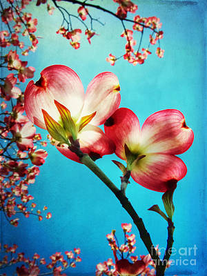 Blooms Of The Dogwood Print by Darren Fisher