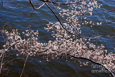 Lake Waramaug Photograph - Blossom On Lake by Andrea Simon