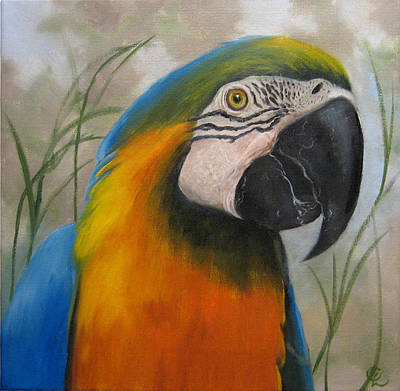 Blue And Gold Macaw Painting - Blue And Gold by Colleen Lambert