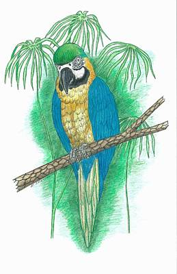 Macaw Drawing - Blue And Gold Macaw by Richard Freshour