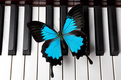 Blue Butterfly On Piano Keys Print by Garry Gay