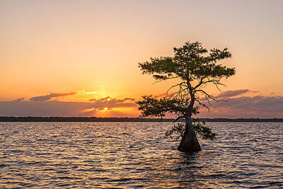Blue Cypress Lake Sunrise Print by Claudia Domenig