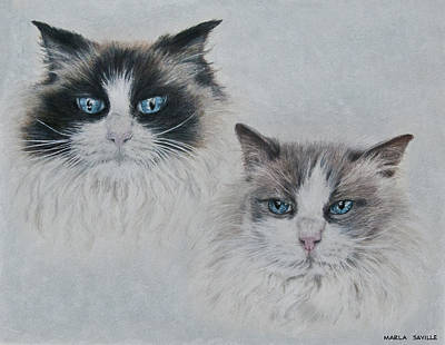 Blue Eyed Cats Print by Marla Saville