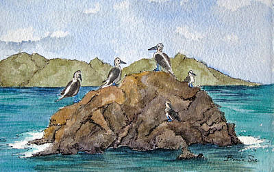 Blue Footed Boobies In Galapagos Original by Bonnie Sue Schwartz