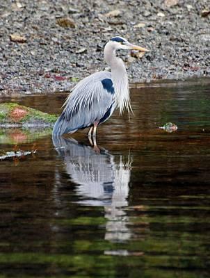 Blue Heron Print by Jim Moore