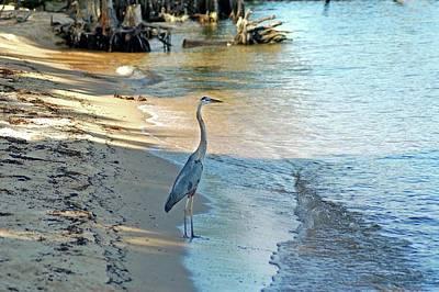 Blue Heron On The Beach Print by Michael Thomas