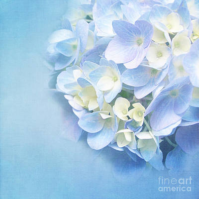 Blue Hydrangea Print by VIAINA Visual Artist