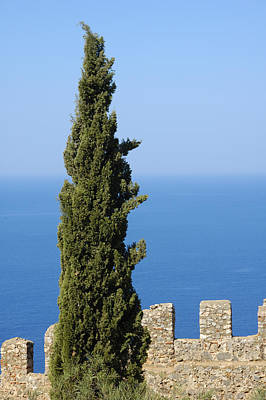 Blue Ocean And Sky Green Tree - Serene And Calming  Print by Matthias Hauser