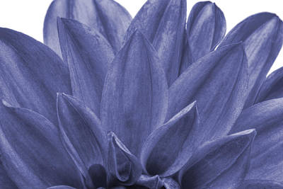 Pompons Photograph - Blue Petals by Al Hurley