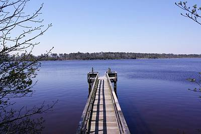 Branches Photograph - Blue Pier by Bethany Fulford