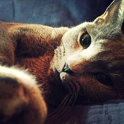 Cats Photograph - Blue Russian by Natasha Marco