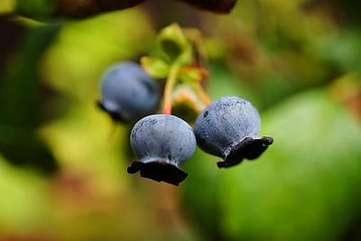 Blueberries Print by Beth Akerman