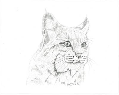 Bob Cat 2 Print by EJ John Baldwin