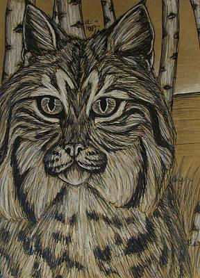 Bobcat And Birch 2  Original by Olivia Hoppe
