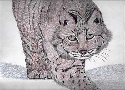 Bobcat Print by Tony  Nelson