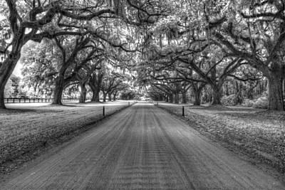 Boone Plantation Driveway Print by Nick  Shirghio