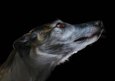 Greyhound Digital Art - Born For The Run by Julie L Hoddinott