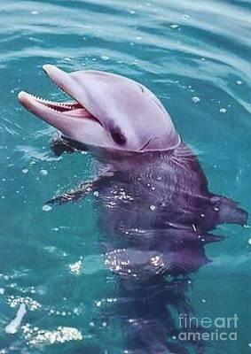 Bottle Nosed Dolphin Print by Diane Kurtz