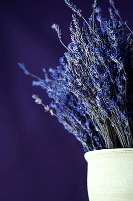 Provence Photograph - Bouquet Of Lavender by HD Connelly