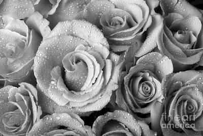 Red Photograph - Bouquet Of Roses With Water Drops In Black And White by James BO  Insogna