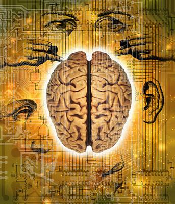 Brain And Senses Print by Mehau Kulyk