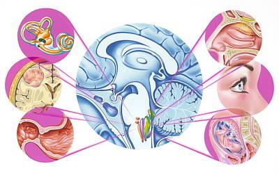 Brain Nausea Reflex Print by John Bavosi