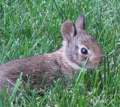 Brave Yard Bunny Print by Donna Cavender