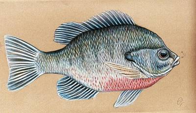 Bream On The Fly Original by H C Denney