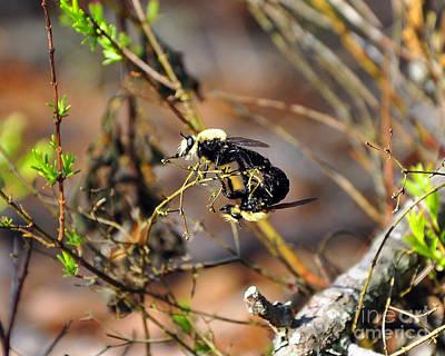 Breeding Bees Print by Al Powell Photography USA