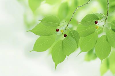 Bright Green Leaves Print by Imagewerks