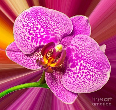 Bright Orchid Print by Michael Waters
