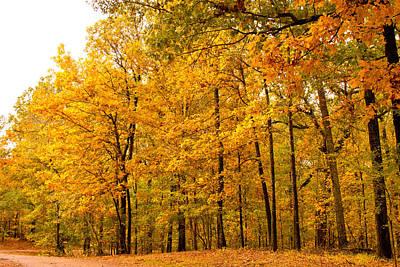 Autumn Photograph - Brilliance by Barry Jones