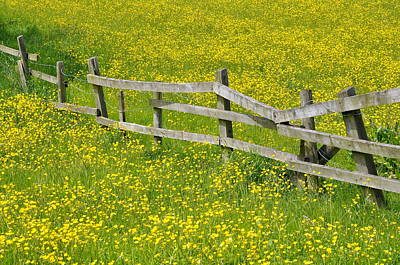 Separation Photograph - Broken Fence And Buttercup Field by Photos by R A Kearton