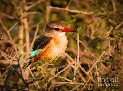 Kingfisher Digital Art - Brown-hooded Kingfisher South African Kingfisher by Andy Smy