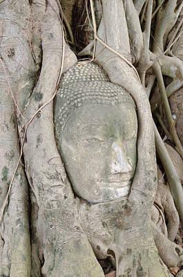 Buddha Head In A Tree Print by Kanoksak Detboon