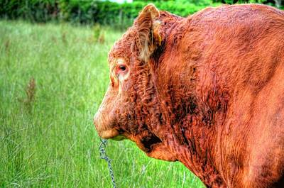 Bull Print by Barry R Jones Jr