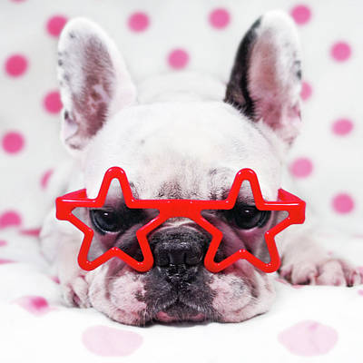 Bulldog With Star Glasses Print by Retales Botijero