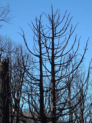 Burned Trees 2 Print by Naxart Studio