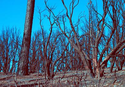 Burned Trees And The Sky Print by Naxart Studio