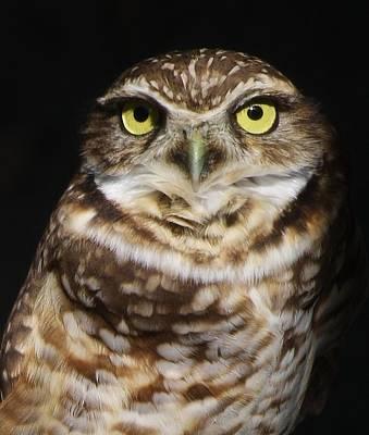 Burrowing Owl Print by Paulette Thomas