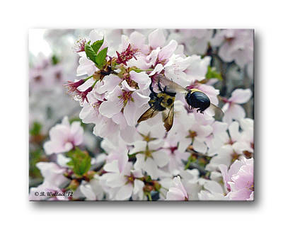 Wiz Photograph - Busy Bees by Brian Wallace