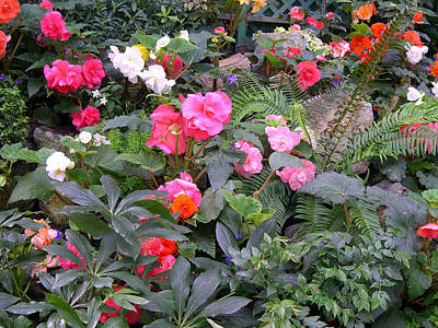 Begonia Garden Digital Art - Butchart Begonia Garden by Claude McCoy