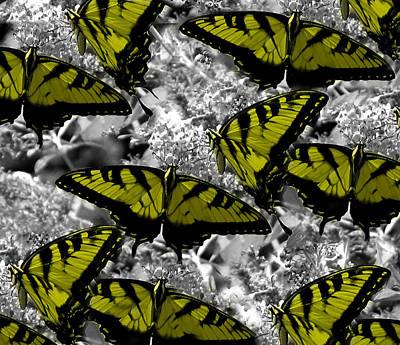 Butter-fly  Print by Julian Bralley