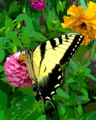 Yellow Butterfly Photograph - Butterfly And Blooms by Padre Art