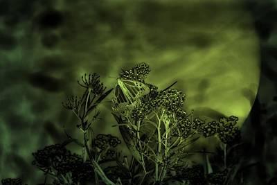 Butterfly At Night  Print by Michael Mrozik