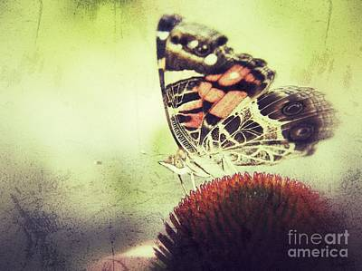 Photograph - Butterfly by Christy Bruna