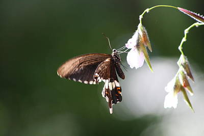 Photograph - Butterfly  by Gonca Yengin