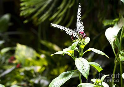Butterfly Kisses Print by Leslie Leda