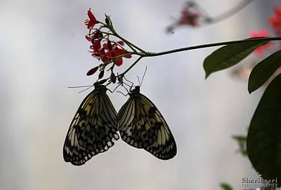 Wings Photograph - Butterfly Love by Sheri Bartay